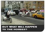 But what will happen to the horses