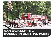 Can we keep the horses in Central Park