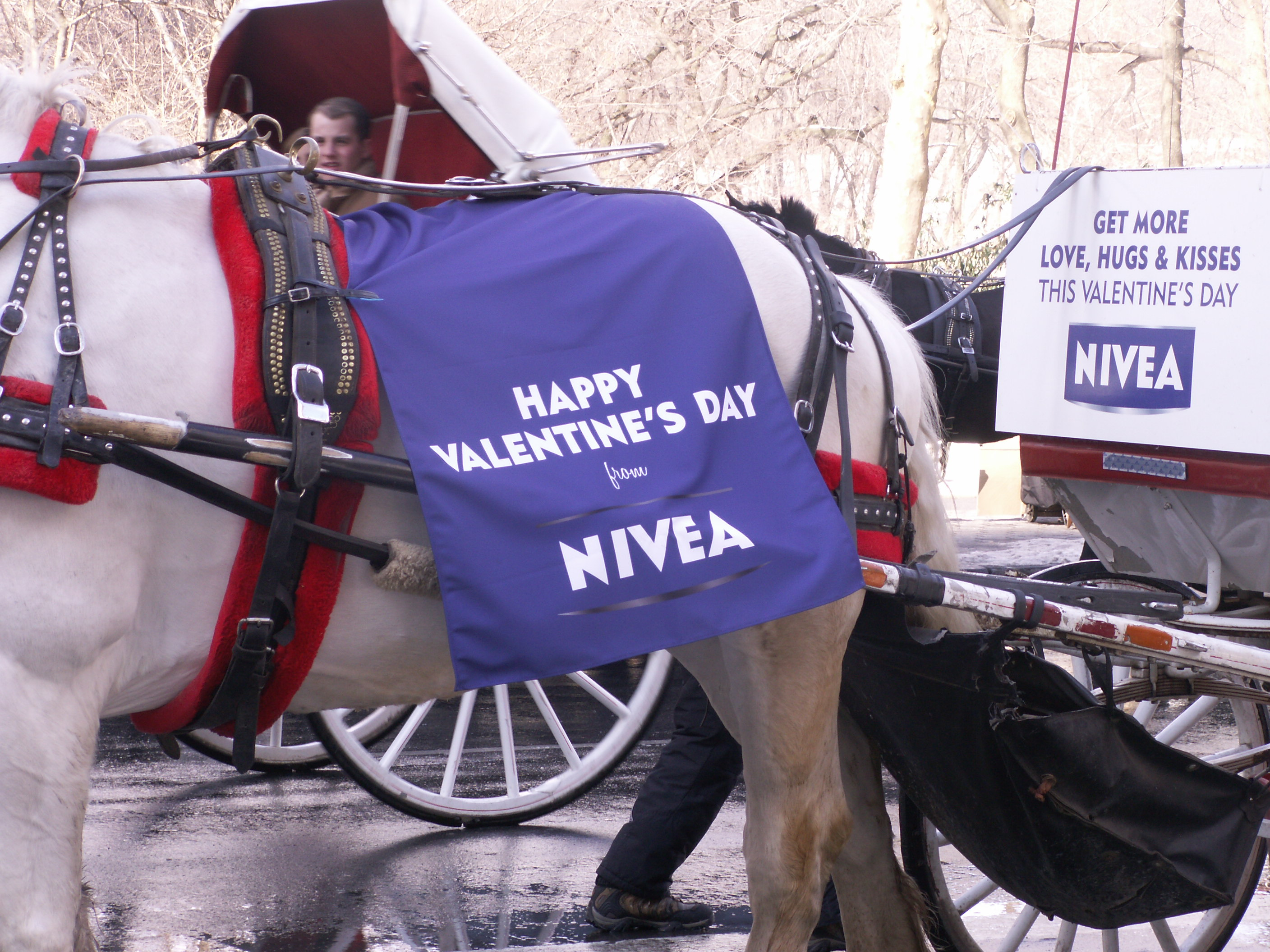 nivea carriage horse